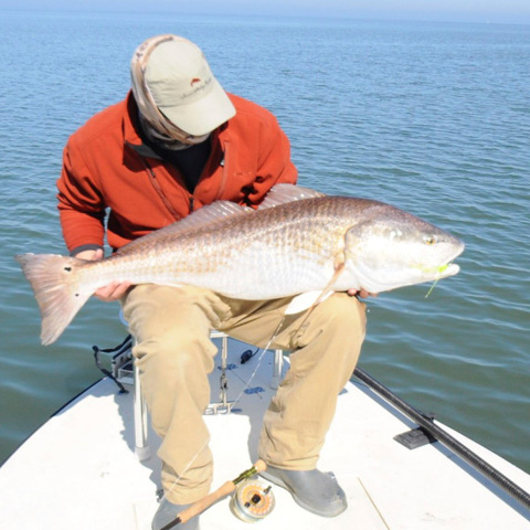 big-bull-redfish