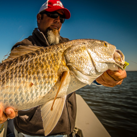 hopedale-redfish-guide
